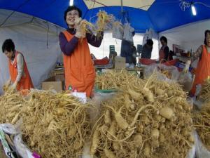 Chuyên cung cấp sâm tươi Hàn Quốc 6 năm tuổi hàng xách tay 100% chất lượng