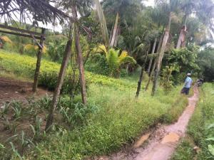 Đất nông nghiệp dt 3420m2 tại xã vĩnh thành chợ lách bến tre