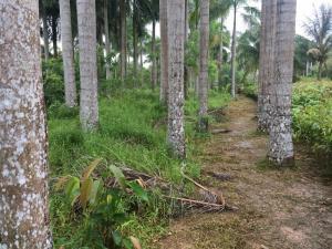 Cần bán 12.000m2 đất nông nghiệp tại xã vĩnh thành chợ lách bến tre