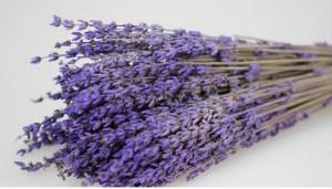 Quà Tặng 20/10 - Hoa Khô Lavender, Hoa Oải Hương Khô tượng trưng cho sự thủy chung trong tình yêu - MSN1831030