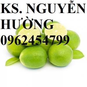 Chuyên cung cấp giống cây chanh không hạt, hàng chuẩn, giá tốt, giao cây toàn quốc.