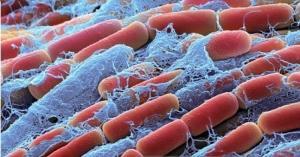 Cung cấp các loại men vi sinh cho thủy sản