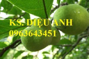Chuyên cung cấp cây giống: cây chay giống, cây chay cỡ lớn