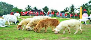Nông Trại nuôi Cừu