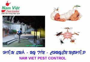Dịch vụ diệt muỗi giá rẻ tại Gò Vấp