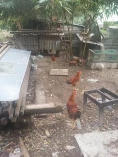 Bán lô đất kiệt Điện Biên Phủ 45,9m2