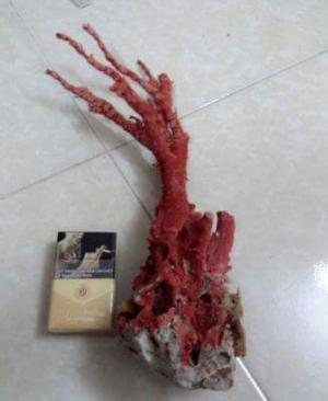 San hô đỏ tự nhiên