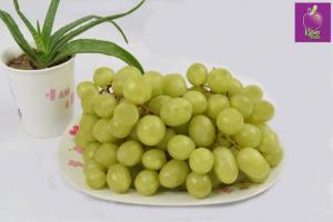 Bho xanh không hạt Mỹ tại Klever Fruits