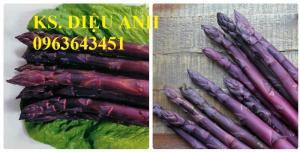 Địa chỉ cung cấp cây giống măng tây tím, hạt giống măng tây tím chuẩn, uy tín, chất lượng