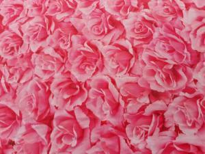 phông nền chụp ảnh hoa hồng