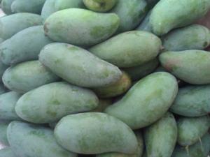Chuyên cung cấp các loại cây ăn quả,giống xoài thái chất lượng cao