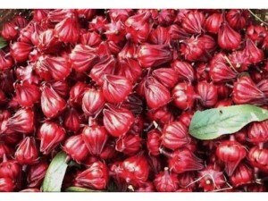 Cung cấp sỉ, lẻ hoa atiso đỏ