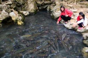 suối cá thần tại Thanh Hóa