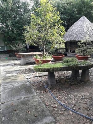nhà và đất thổ cư 27m x 100m đường nhựa lớn tại xã phú hòa đông huyện củ chi