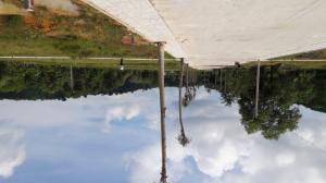 Đất nền Phú Quốc giá rẻ trên đường Cây Thông Ngoài, 480 triệu/nền, chiết khấu 16%