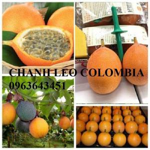 Chuyên cung cấp cây giống nhập khẩu: chanh dây Colombia