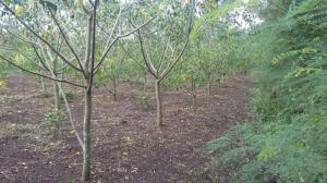 Bán gấp 8000m2 đất đang trồng cây công nghiệp, Giá thương lượng, sổ đỏ, đường xe tải