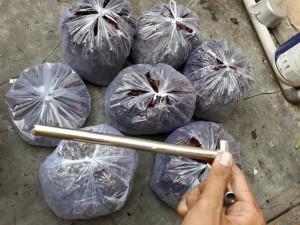 Chuyên cung cấp hoa Atios đỏ Bình Thuận giá sỉ
