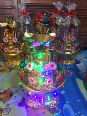 Cây Kim Tiền ,Cây Thỏi Vàng, Cây Đô , Cành Vàng Lá Ngọc