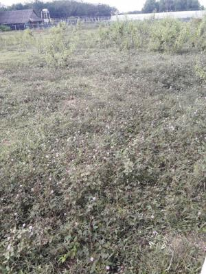 đất 60m x 68m, có 3000 m2 đất thổ cư đường nhựa xã an nhơn tây,củ chi.