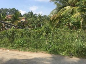 Đất nông nghiệp dt 1000m2 tại xã long thới chợ lách bến tre