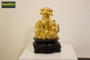 Dercor - Chó vàng