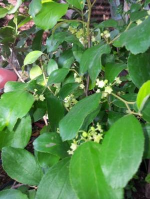 Địa chỉ cung cấp cây giống chất lượng, giống cây táo t5 số lượng lớn, giao cây toàn quốc