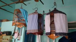 Bán chim lồng chim, thức ăn chim tại Nha Trang