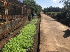 Bán Đất Thổ Cư 7*26 hẻm,Nguyễn Thị Định,gần Trường Lái Việt Mỹ, giá rẻ 470tr