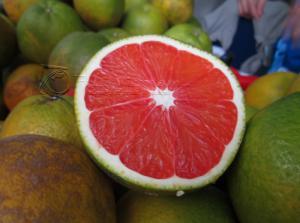 Giống cam nhập khẩu