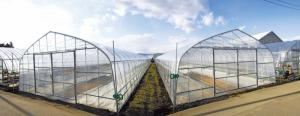 lưới chắn côn trùng vườn rau sạch, lưới nhựa mắt nhỏ chống muỗi