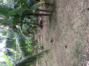 Đất vườn xã thành triệu châu thành bến tre dt 10.000m2