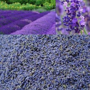 Túi Thơm Hoa Oải Hương Lavender, Túi Thơm Hoa Khô Khử Mùi