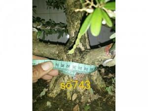 Linh sam số 743 và 744