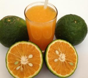 Giống cam canh, cam sành cung cấp số lượng lớn, giao hàng toàn quốc