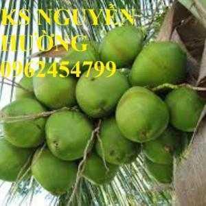 Bán cây giống dừa xiêm lùn, dừa dứa, dừa lửa cây giống chuẩn f1 - giao cây toàn quốc