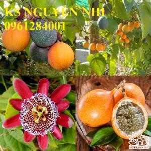 Bán cây giống chanh leo ngọt colombia, giống cây chanh nhập khẩu chuẩn giống f1, giao cây toàn quốc