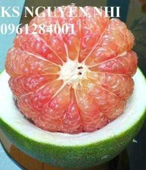 Cung cấp số lượng lớn giống cây ăn quả, giống cây bưởi da xanh chuẩn giống chất lượng - giao cây toàn quốc