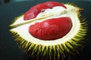 Sầu riêng Thái Lan, sầu riêng ruột đỏ, chuẩn giống