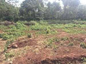 Bán mảnh đất ở Y Moan, dt 15x20m, giá chỉ 930tr