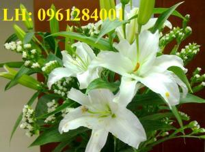 Ý nghĩa của hoa lyly, Những điều bí ẩn của hoa lyly chúng ta cần biết