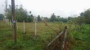 Chú ý! Cơ hội sở hữu mảnh đất trồng cây lâu năm có 300m2 thổ cư tại Củ Chi, giá tốt!