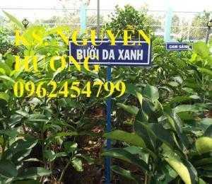 Cung cấp cây giống bưởi da xanh chuẩn giống, chất lượng. chuyên cung cấp cây giống uy tín