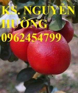 Mua cây giống bưởi đỏ luận văn ở đâu chuẩn giống, cây giống chất lượng. địa chỉ cung cấp cây giống uy tín - giao cây toàn quốc