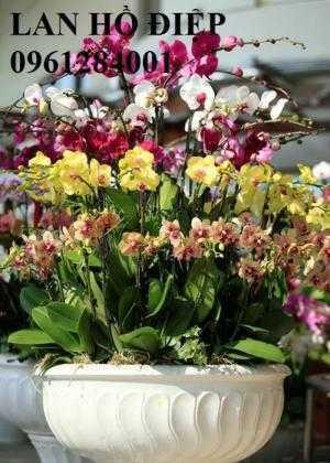 Hoa chơi tết, hoa phát lộc, hoa phát tài. địa chỉ cung cấp hoa chơi tết số lượng lớn uy tín chất lượng