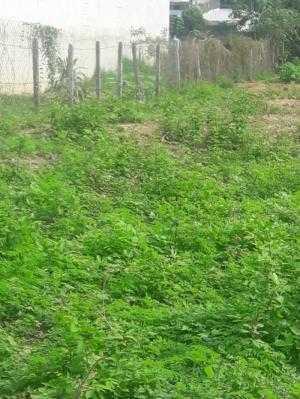 Đất 14 m x 54 m mặt tiền nhựa ấp 1 xã Phạm Văn Cội,Củ Chi