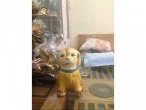 Chó cún cực xinh cực yêu đón chào năm mới Mậu Tuất 2018