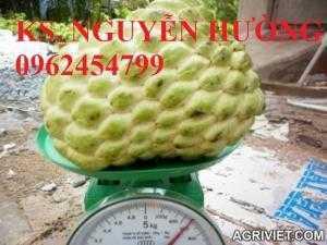 Cây na, cây giống na bở đài loan nhập khẩu. địa chỉ chuyên cung cấp các loại cây giống ăn quả