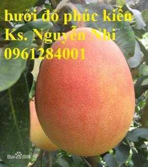 Bưởi đỏ phúc kiến, đơn vị chuyên cung cấp các loại giống cây ăn quả chất lượng, giao cây toàn quốc