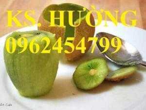 Cây giống kiwi, cung cấp cây giống kiwi chất lượng, địa chỉ cung cấp cây giống toàn quốc